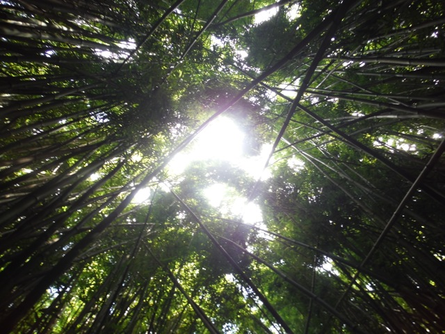 Bamboo Forest @ Pipiwai Trail