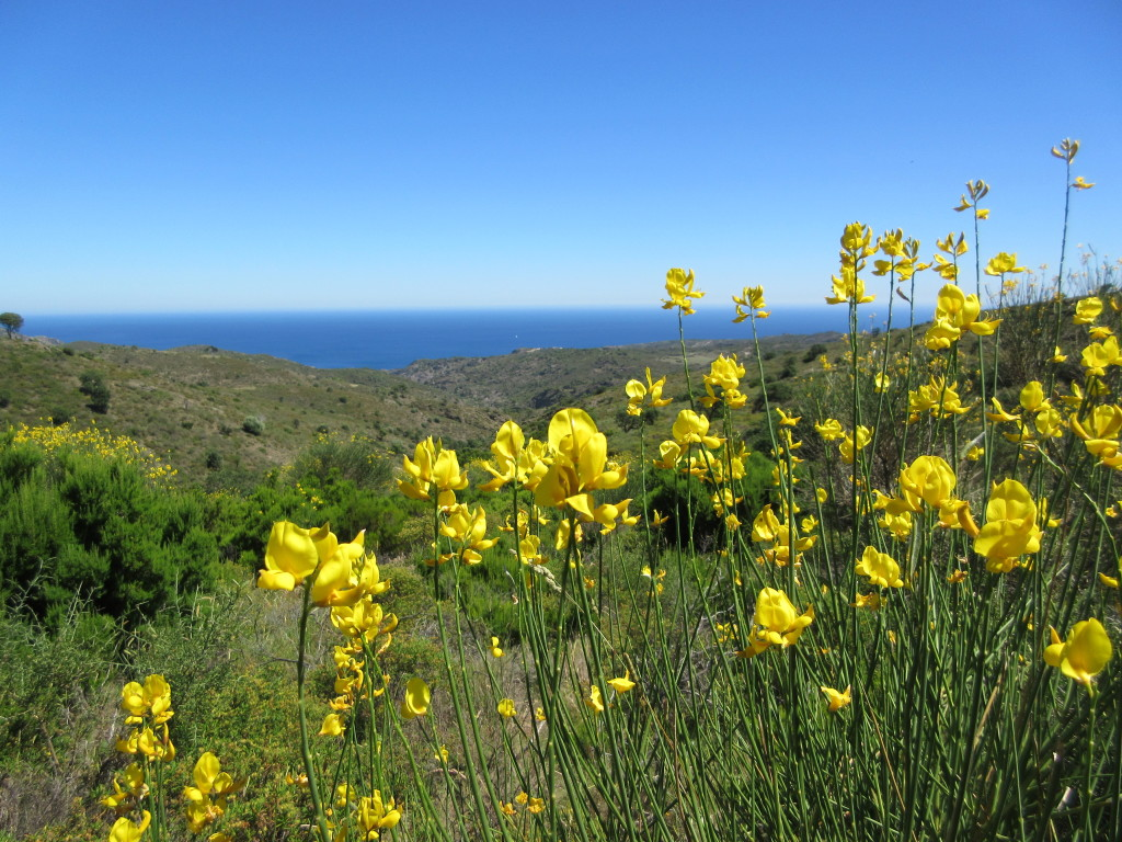 Wild flowers on way to Port de la Selva
